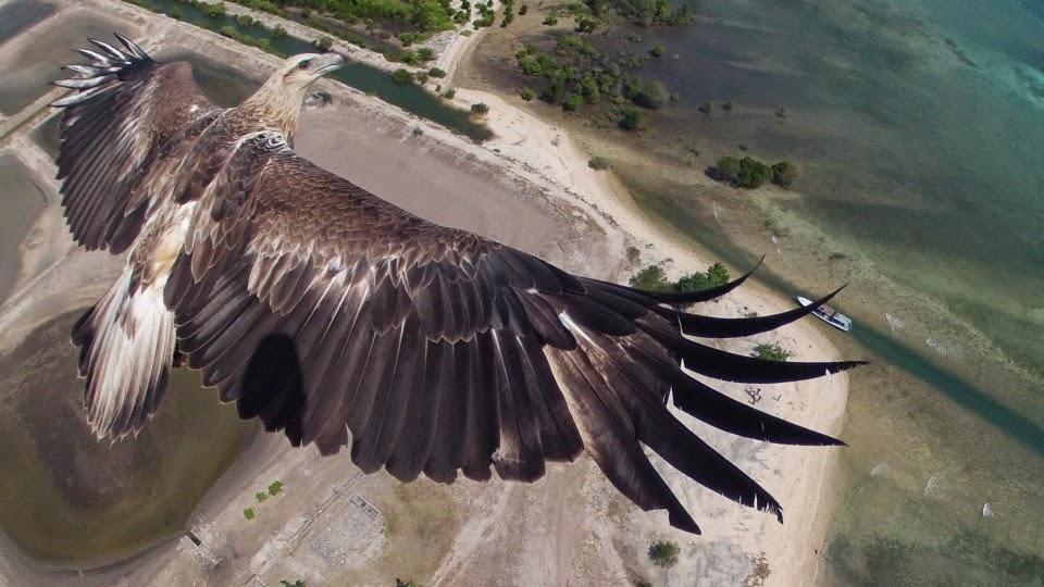 imagen de aguila hecha con dron