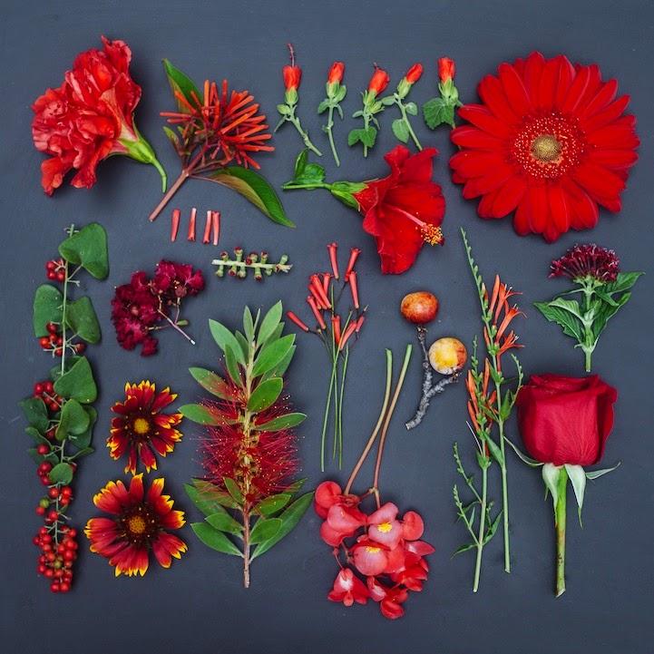 fotografia-emily-blincoe-flores
